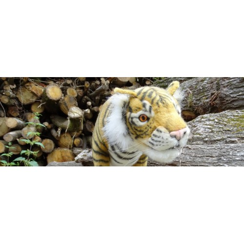 Hansa Tigre