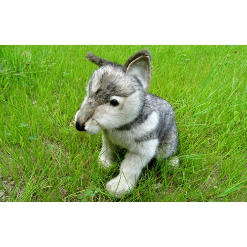Hansa Lobo cachorro