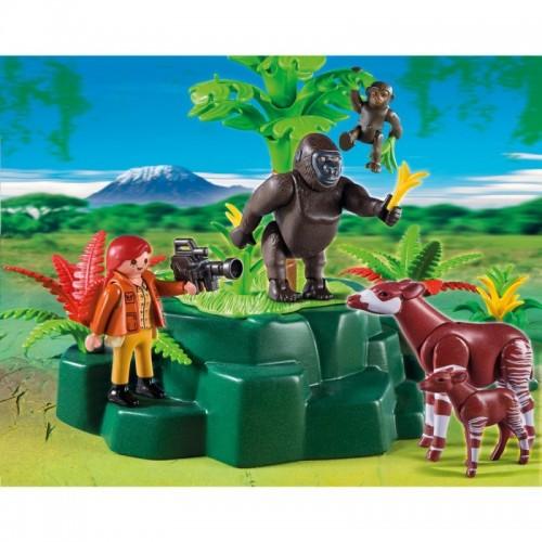 5415 Camarógrafa con Gorilas y Okapis