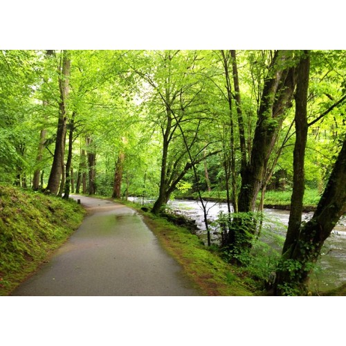 Botas Timberland Chocorua Trail Gore-tex