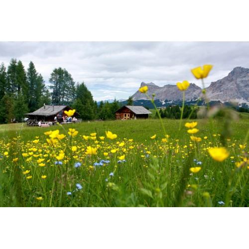 Dolomite Steinbock Gore-tex Green