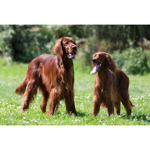 Silbato de ultrasonidos para entrenamiento canino con capuchón