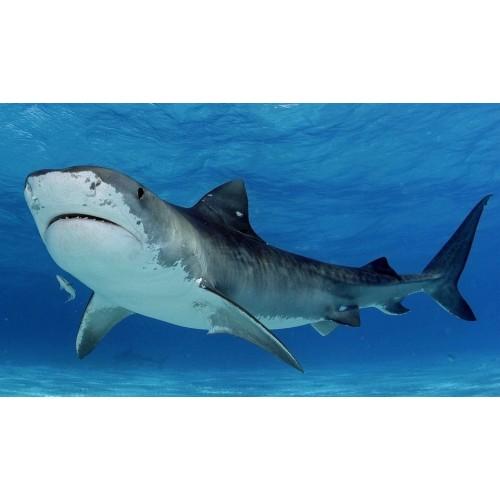 41448 Set de tiburones