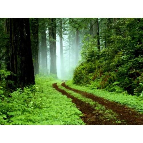Clisport Polainas Forest