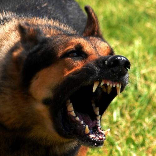 Eyenimal Ahuyentador de perros por Ultrasonidos