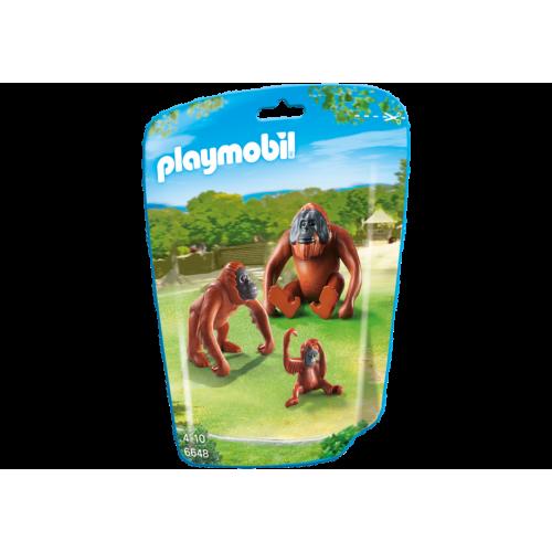 6648 Familia de orangutanes